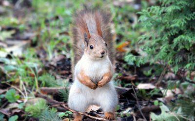Beware of Squirrels